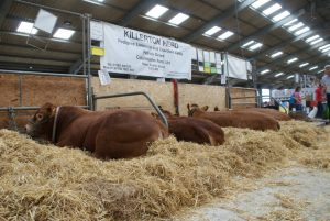 Killerton Herd at the Cornwall Show 2016