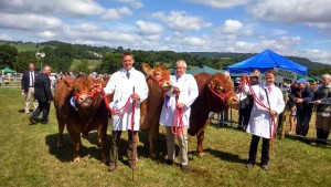 Killerton Iloveit at Honiton Show 2015