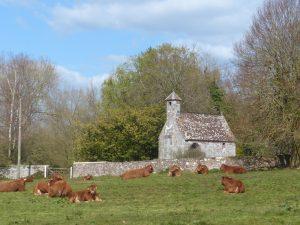 Killerton Limousin