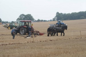 Killerton Limousin hosting Ploughing Match