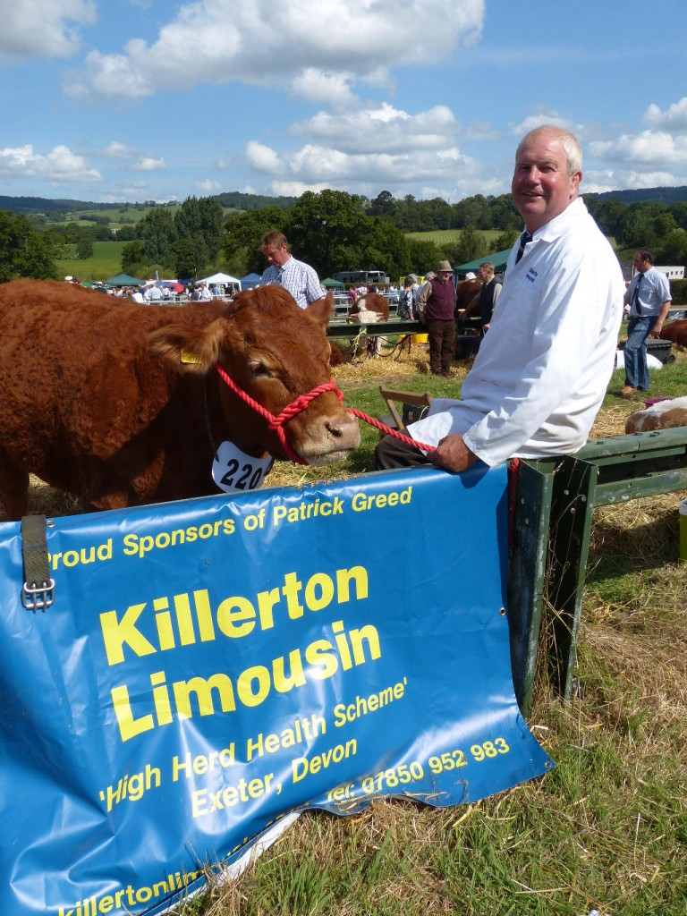 Killerton Limousin at Honiton show 2014