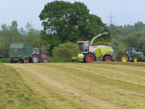 Killerton Limousin silage making May 2014