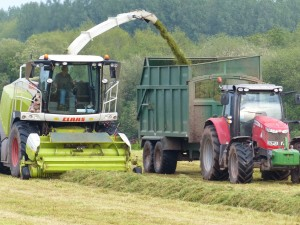 Killerton Limousin silage making in May 2014