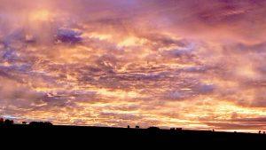 Killerton Winter Sun