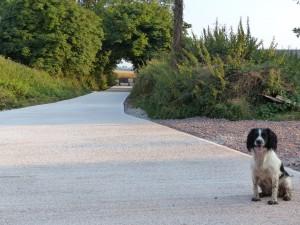 New Drive for Killerton Limousin