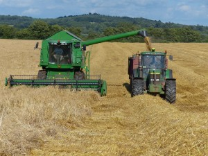 Winter Barley harvest at Killerton Limousin