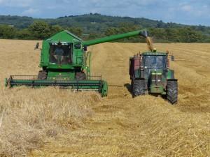 Winter Barley harvest at Killerton Limousin
