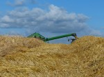 Winter Barley harvest july 2014