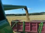 Winter Barley july 2014